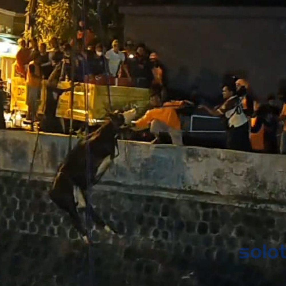 FOTO Sapi Kurban Nyebur ke Sungai dan Di Evakuasi Menggunakan Crane