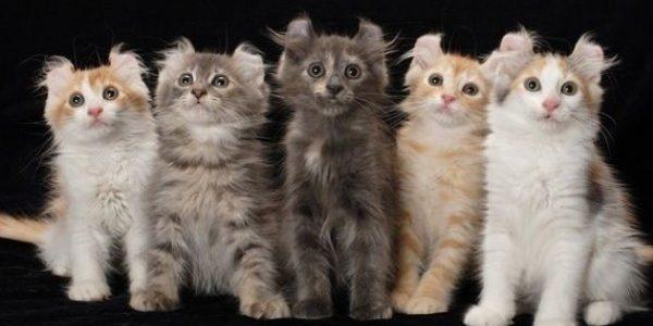 Jenis Kucing-Kucing Ini Harganya Fantastis, Ras Apa Saja Itu ?