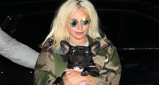 Lady Gaga sering membawa anjingnya pada suatu acara penghargaan atau pemutaran perdana film (Foto: BBC/Getty Images)