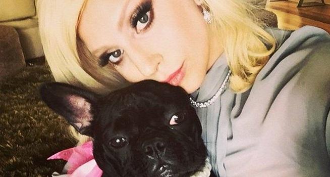Lady Gaga bersama anjing bulldog Prancis miliknya (Foto: BBC/Instagram)